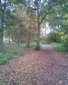 BM Woods